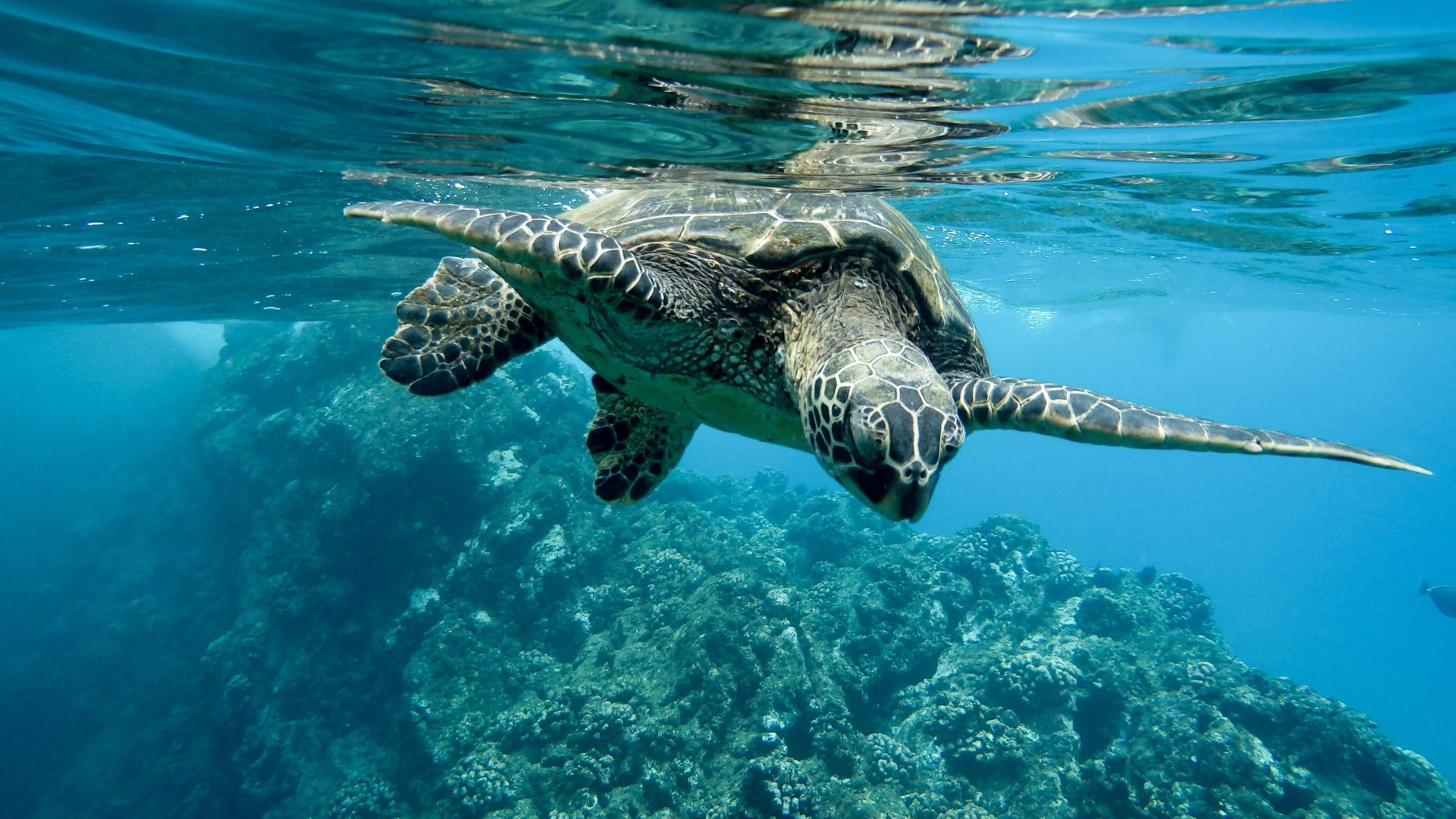 Snorkeling Tenerife